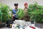 Serra di marijuana in una casa del Catanese, in manette 56enne: denunciata la convivente