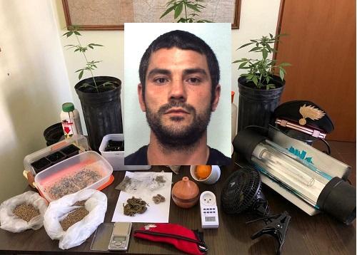 Serra della droga nel Catanese: piante di cannabis e marijuana già essiccata, un arresto