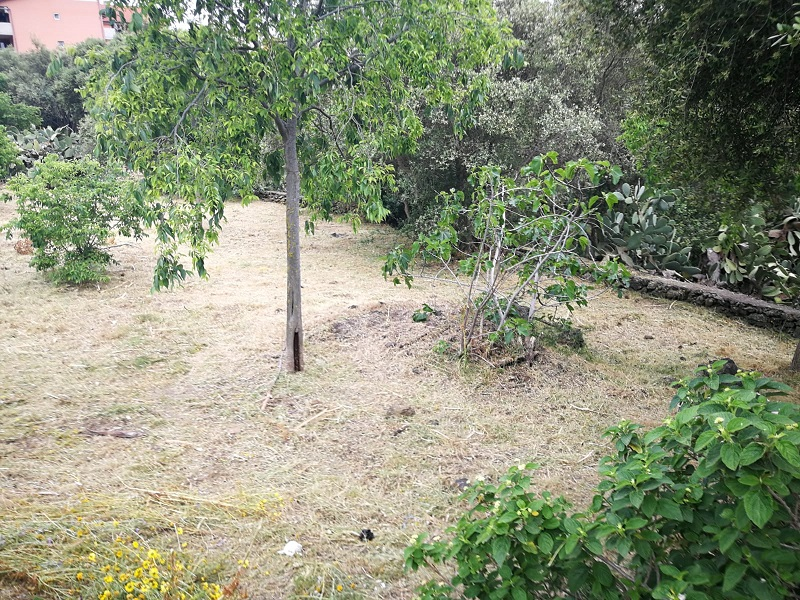 """Catania, lavori di manutenzione nel parco degli Ulivi. Buceti (IV Municipio): """"Rispondiamo alle richieste dei cittadini"""""""