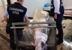 Catania, blitz dei NAS all'ingrosso di pesce: sequestrato lo squalo pescato a Ognina