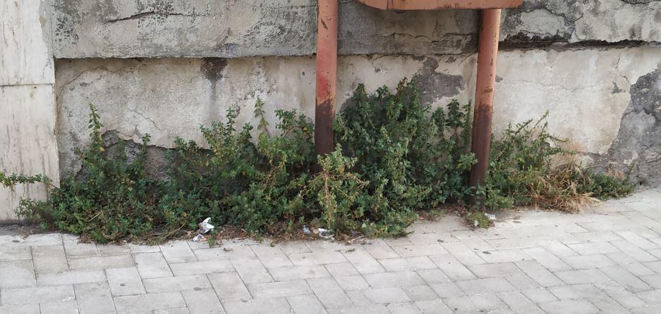Erbacce invadono i marciapiedi di via Carducci e via Ala, la segnalazione del Comitato Cittadino Vulcania