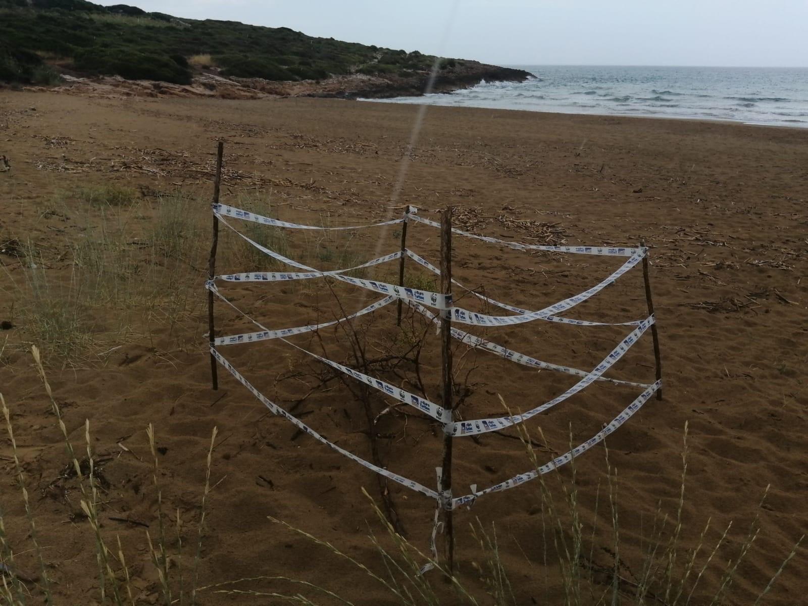 Nido di tartaruga marina sulla spiaggia dell'Eloro: ordinanza di interdizione dell'area