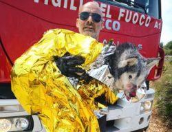 Cane rimane incastrato tra gli scogli e si ferisce: l'intervento dei vigili del fuoco gli salva la vita – FOTO