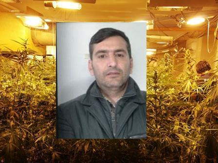 San Cristoforo, una delle più grandi coltivazioni di marijuana mai trovate nel centro storico catanese: arrestato 45enne
