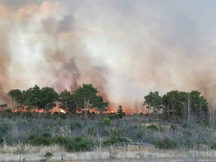 Fiamme alte nell'Agrigentino, in fumo diversi ettari di macchia mediterranea: intervento dei vigili del fuoco