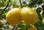 Arriva nei supermercati la Fanta 100% con limoni di Siracusa IGP: un nuovo modo di valorizzare le eccellenze dell'Isola