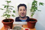 Beccato con marijuana nel Catanese, in casa piante di cannabis indica: pusher 54enne in manette