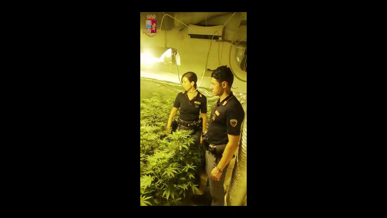 Viavai sospetto da un appartamento smaschera serra indoor di marijuana: arrestato 49enne