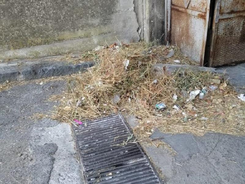 Catania, foglie secche davanti ai garage o ai bordi delle strada in via Don Minzoni: la denuncia di Zingale