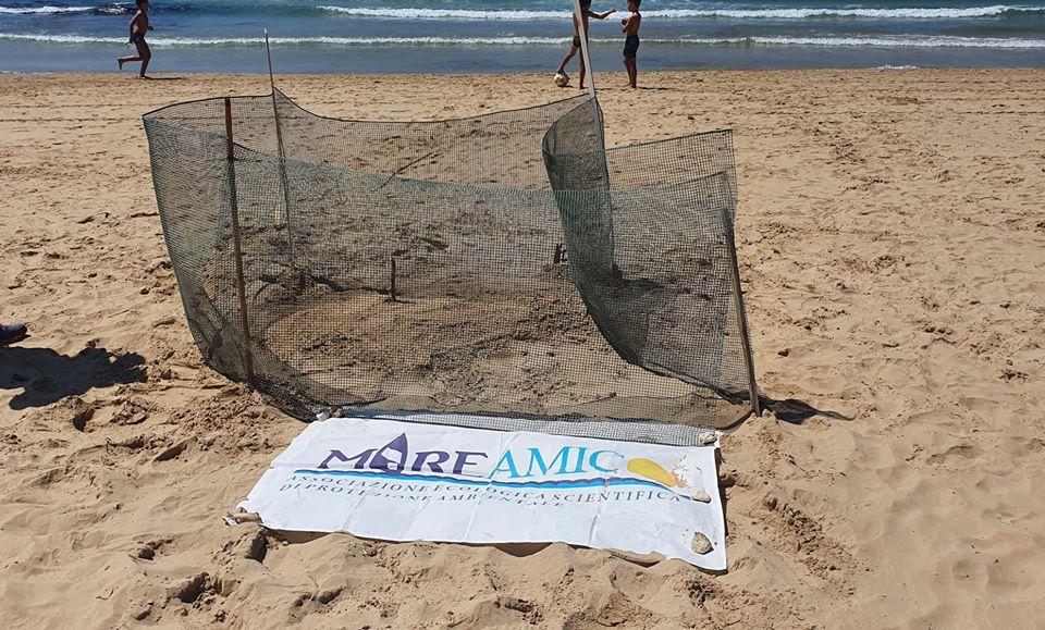 """Caretta Caretta depone le sue uova a Punta Grande, Mareamico: """"Non succedeva da 17 anni"""""""