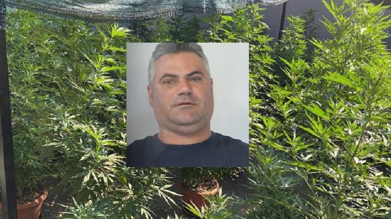 Coltivava marijuana in uno stabile in disuso di San Nullo: in manette Agatino Aperi