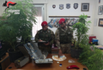 Trovato nella sua abitazione con 5 piante di marijuana e 6mila euro in contanti: arrestato 52enne