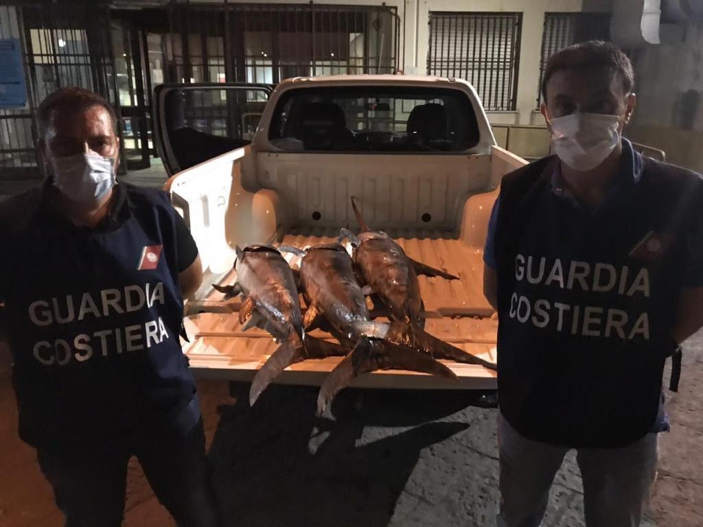 """Operazione """"Tuna & Sword"""", la filiera della pesca catanese nel mirino della Guardia Costiera: i dettagli"""