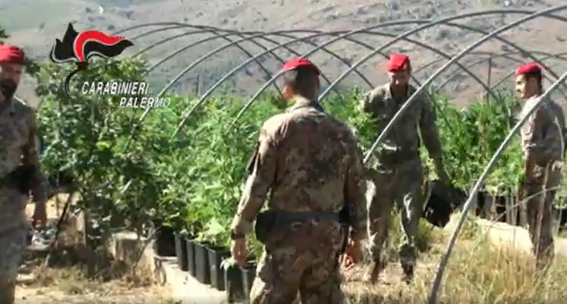 """""""Laboratorio"""" per la produzione e il confezionamento di marijuana: in manette tre pusher – VIDEO"""