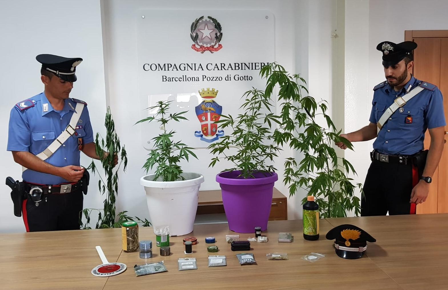 Blitz antidroga, trovati in appartamento 4 piante di cannabis e altri stupefacenti: arrestato pregiudicato