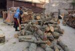 Tentano di rubare legna in area boschiva del Parco dei Nebrodi per rivenderla: due arresti