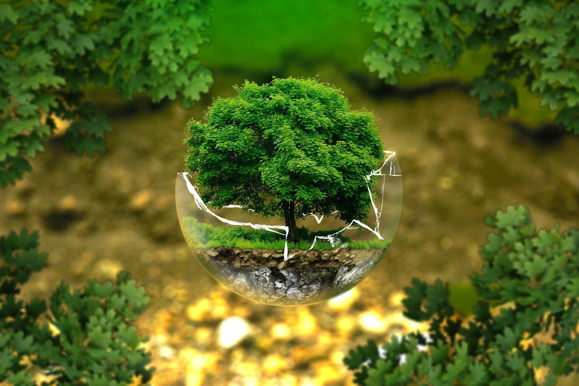 Un cambiamento climatico che rischia di creare disastri irreversibili e l'importanza della cooperazione globale: il Coops Day è dedicato all'ambiente