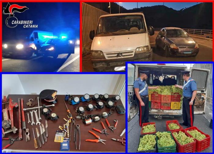 """""""Maestri"""" del furto d'uva scoperti nel Catanese: 6 arresti"""