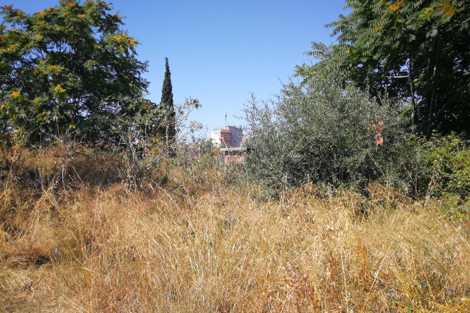 """Catania, piano di recupero per la Timpa di Leucatia. Cardello (II Municipio): """"Un polmone verde da rivalutare e proteggere"""""""