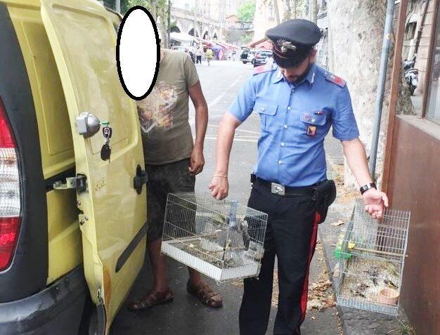 Catania, nascondeva nel furgone gabbiette con cardellini: denunciato un 60enne di Camporotondo Etneo