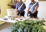 Blitz in un terreno del Catanese, 47enne denunciato: trovate armi, canapa, rifiuti e suini in cattivo stato