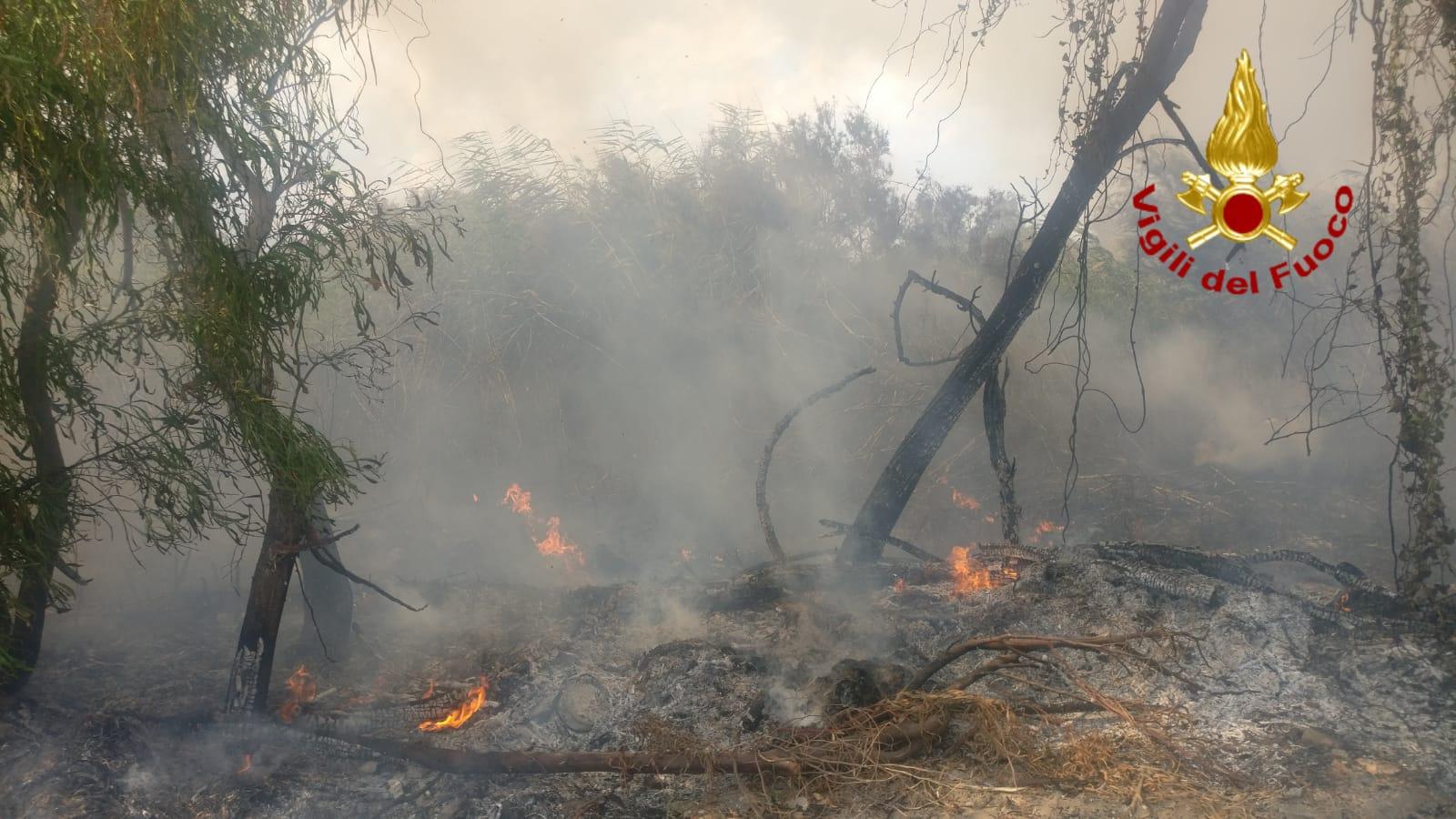 Incendio nell'Oasi del Simeto, fumo alto e fiamme: in azione vigili del fuoco e Forestale – FOTO