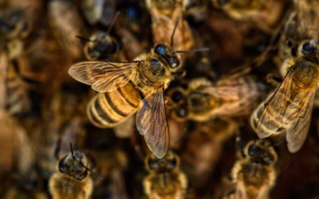 """Sciame d'api invade la piazza, clienti ed esercenti """"bloccati"""" nei negozi"""
