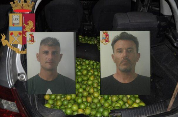"""Rubano 500 chili di limoni da un fondo agricolo: ai domiciliari due catanesi """"in trasferta"""""""