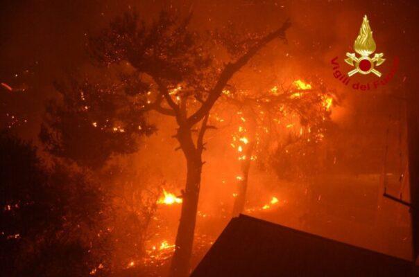 Incendi devastanti ad Altofonte, probabile l'origine dolosa: verrà aperto un fascicolo