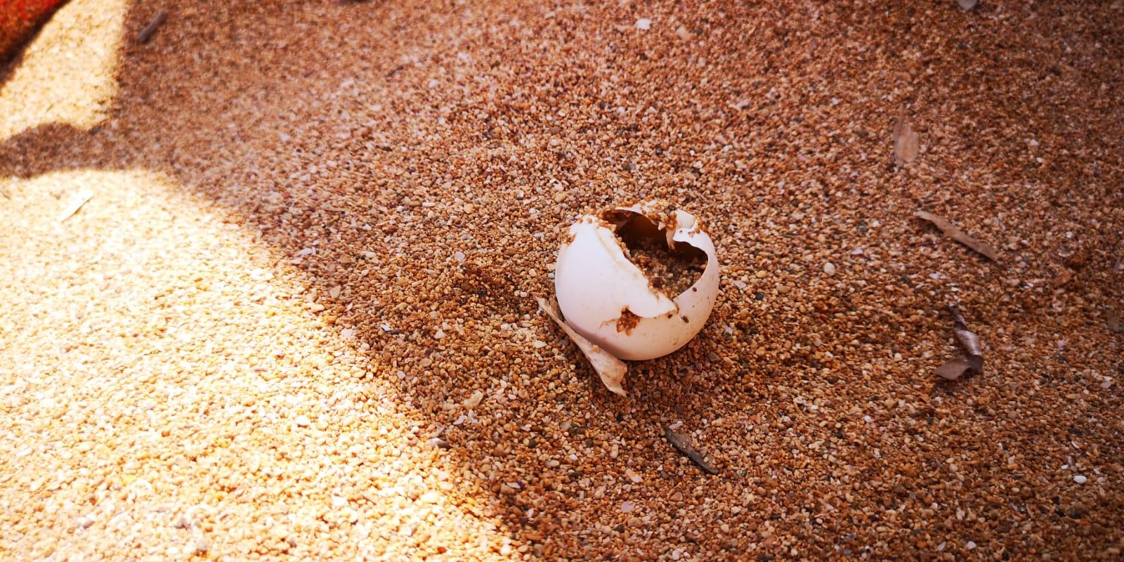 Caretta Caretta depone a Ognina: nido violato ma uova salve – VIDEO