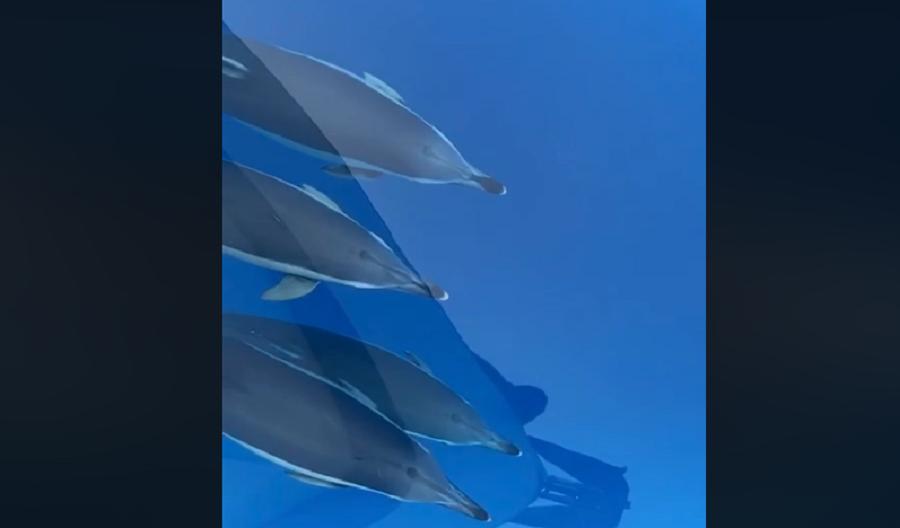 """A lavoro mentre """"nuota"""" con i delfini, dal Capitano dell'ARPA Sicilia delle immagini mozzafiato – IL VIDEO"""