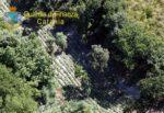 Maxi piantagione di marijuana nel Catanese: sequestro e denuncia a ex imprenditore agricolo – DETTAGLI