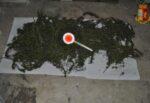 Piante di marijuana nascoste nella cantina di una palazzina del Catanese, scatta il sequestro