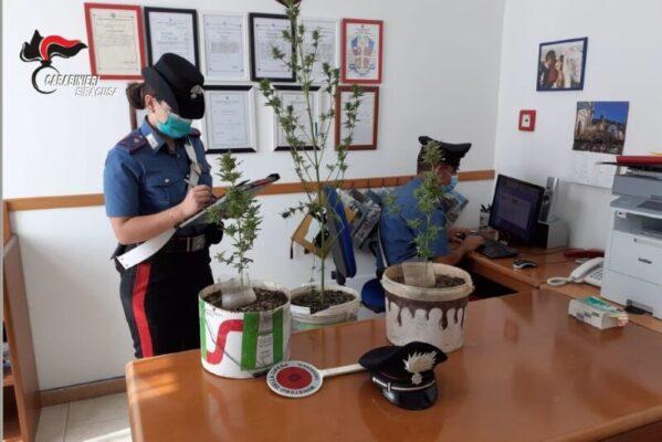 Coltivazione di marijuana nelle campagne, nel mirino due uomini: segnalati
