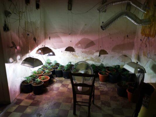 San Cristoforo, perquisizione in un immobile abbandonato: scoperta serra per la coltivazione di marijuana