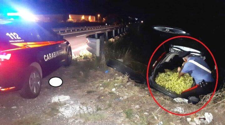 Inseguiti dai carabinieri, lasciano in strada l'auto con 8 tonnellate di uva rubata: rocambolesca fuga nel Catanese