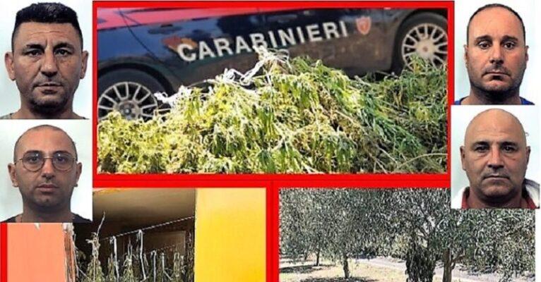 Catanesi alle prese con lo spaccio di marijuana, arrestati in 4: scoperti parte di associazioni mafiose