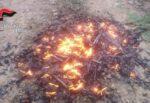 Distrugge con il fuoco tubi in PVC, denunciata una 28enne del Catanese