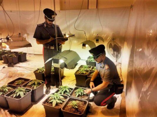 Abitazione trasformata in serra, padre e figlio allestiscono piantagione di marijuana: arrestati