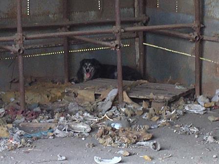 Doppio blitz a Librino, maltrattamento di animali in via Zia Lisa: autorimessa abusiva, controllati 95 mezzi