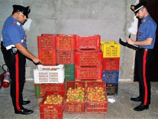 Ancora razzie di raccolti nel Catanese, rubati 500 Kg di fichi d'india: denunciati due uomini