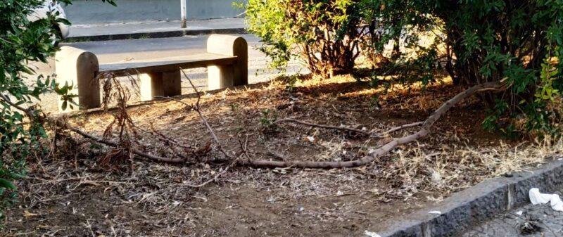 Strade del quartiere Borgo-Sanzio come una giungla, la denuncia del Comitato Cittadino Vulcania – FOTO