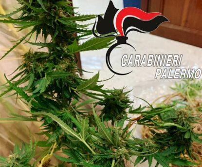 Perquisizione in un terreno di un 47enne: marijuana essiccata e oltre 60 piante, denunciato