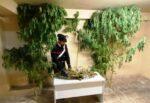 Pensionato e marocchino con la passione per la droga, chi con la canapa e chi con la marijuana: arrestati