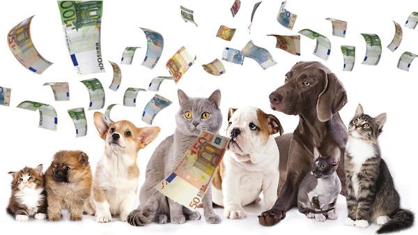 Testamento a favore di animali, si può fare in Italia? Ecco quello che c'è da sapere secondo le indicazioni dell'avvocato