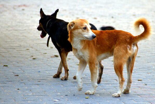 """Allarme randagismo a Catania, cani nelle strade e paura tra gli abitanti. Buceti: """"Preservare incolumità dei residenti"""""""