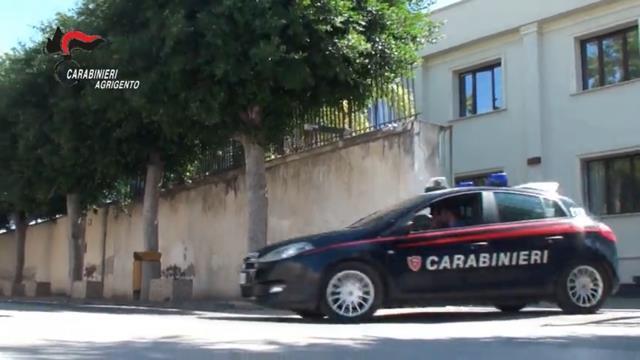Piantagione e serra professionale di marijuana: arrestati due coniugi – VIDEO