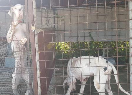 Illegalità diffusa a Librino: cani maltrattati e rifiuti pericolosi abbandonati in aree verdi