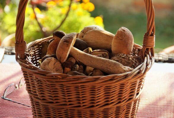 """Tempo di funghi in Sicilia ma occhio ai rischi sul consumo. Alonzo (Asp): """"Tante specie tossiche"""""""
