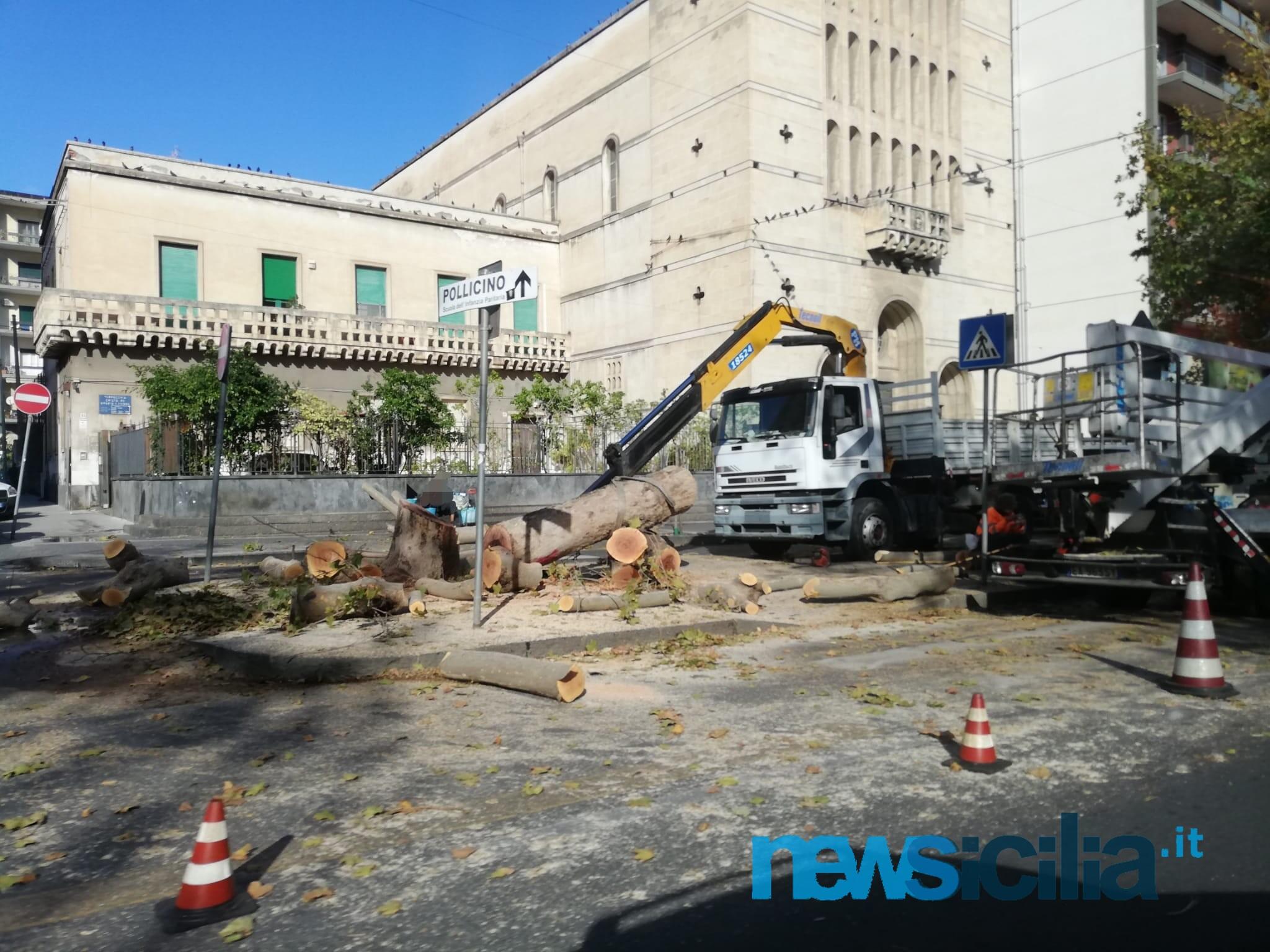 """Catania sempre meno verde? Il """"mistero"""" degli alberi mozzati e la versione di Cantarella: """"È per la sicurezza"""""""